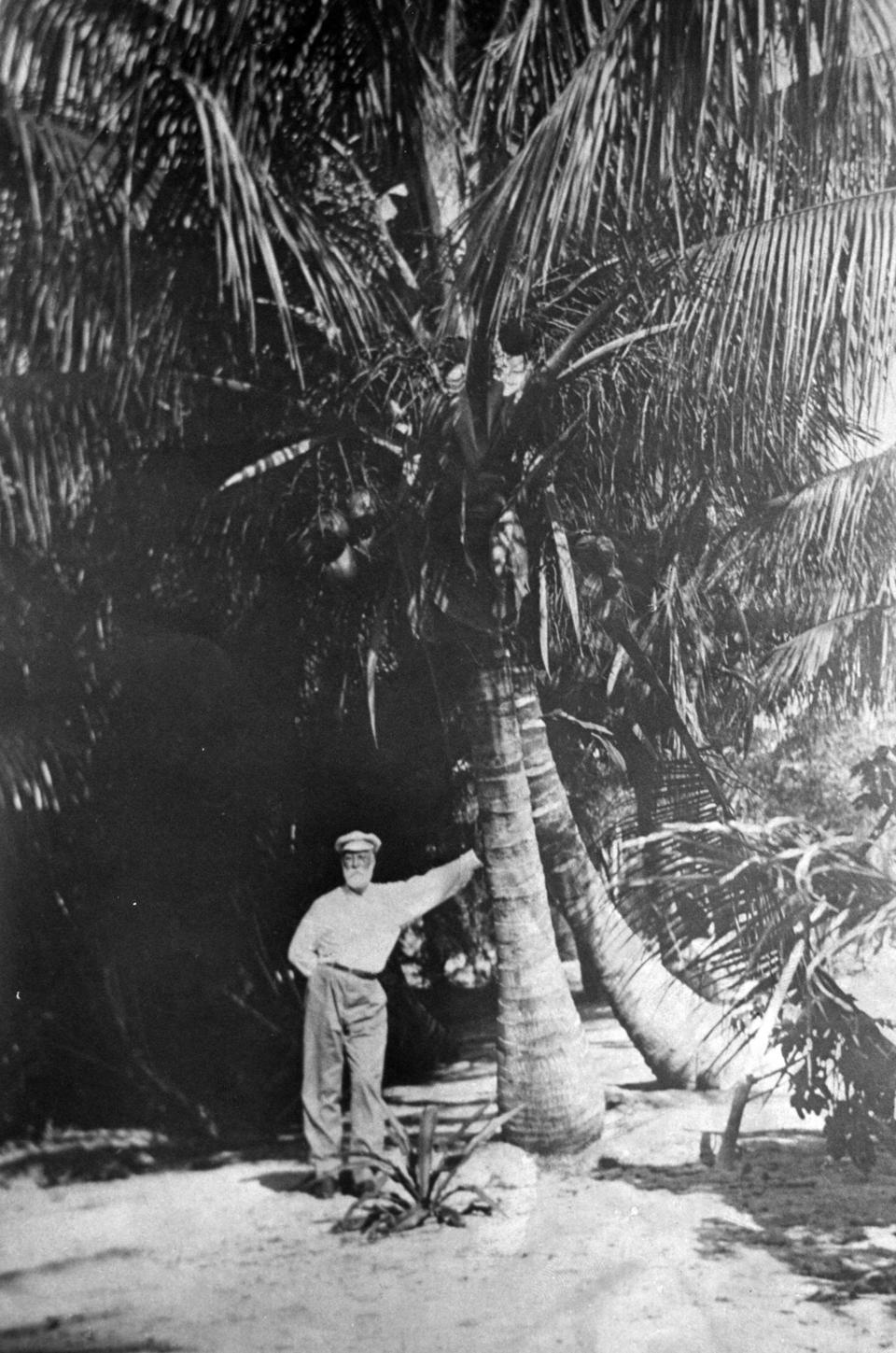 Hugh Taylor Birch and Coconut Palm