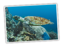 Sea Turtle from Hugh Taylor Birch State Park Beach