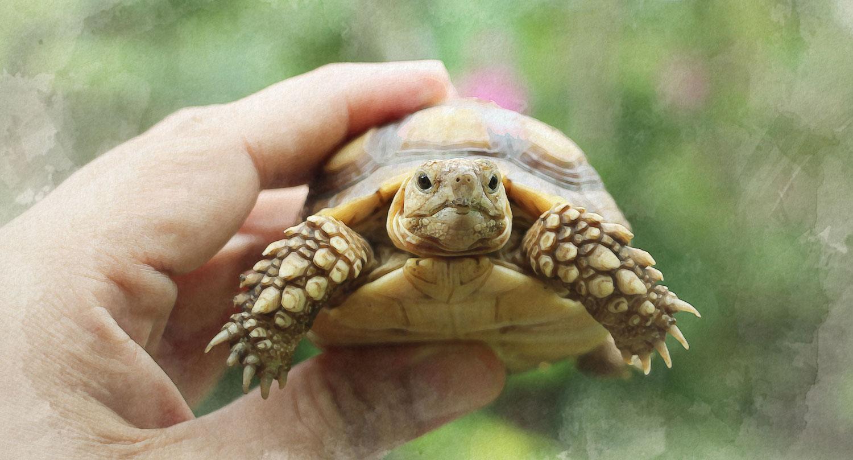 Animal Live Program at Hugh Taylor Birch State Park Donation Page