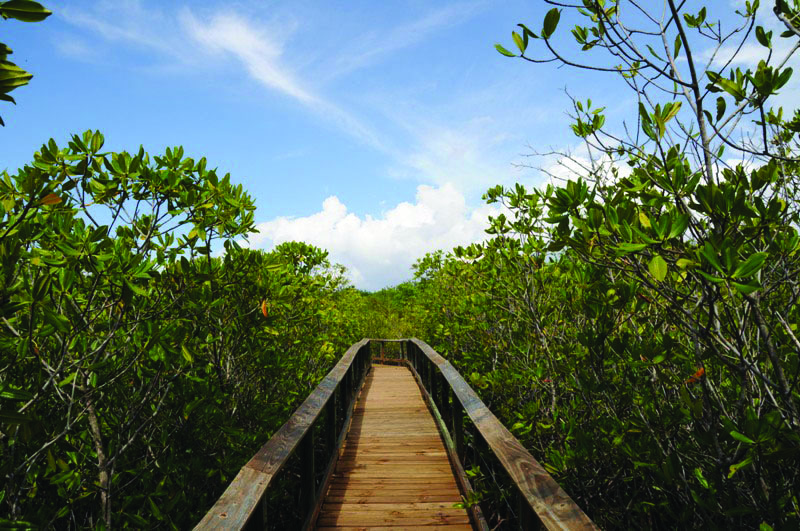 Mangrove Walkway at Birch State Park