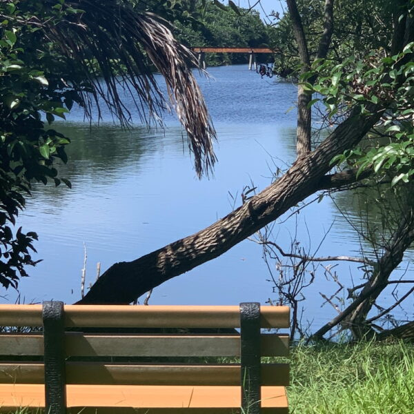 Long Lake or Mangrove View - Bench Campaign at Hugh Taylor Birch State Park